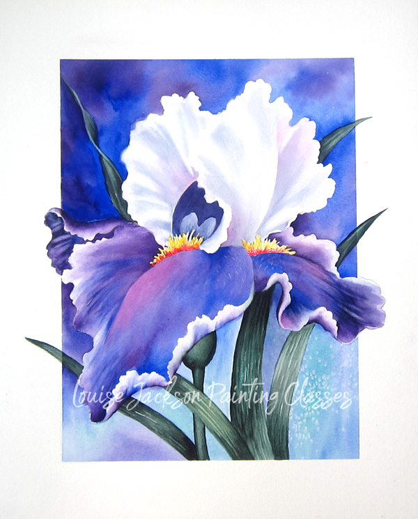 Purple Iris Painting in watercolors or acrylics by Louise Jackson.