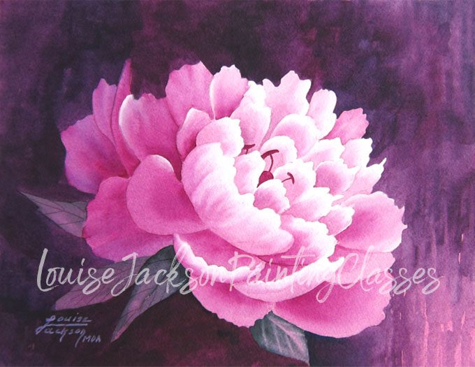 Pink Peony watercolor painting with burgundy background by the artist, Louise Jackson.